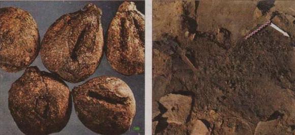 Acini di 6000 fa a Kavala