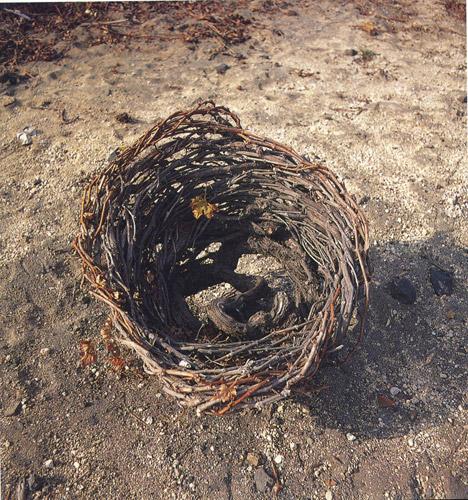 """Le piante sono bassissime e """"a nido"""" per far fronte alla furia del vento Meltemi."""