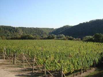 ...the Šobes vineyards