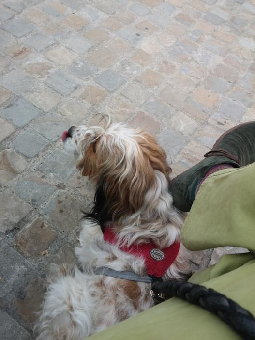 Pluto ha appena adocchiato lo stand della pizzeria Berberè.