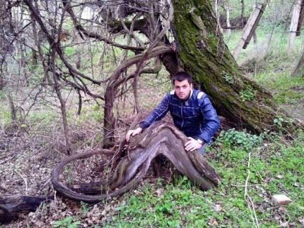 Giorgi e la vite di Tskhenis dzudzu tetri di oltre 400 anni di età