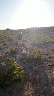 Enrico con Pluto in una vigna di Gavalas