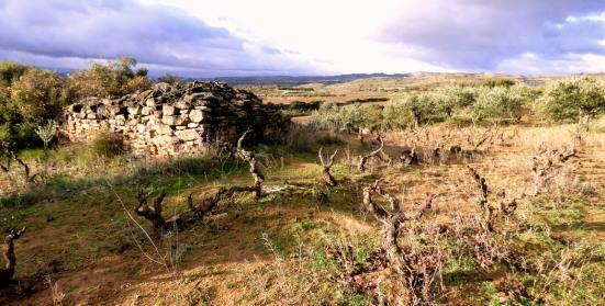 Bodegas Compañon Arrieta - El Mozo Wines Microvinos